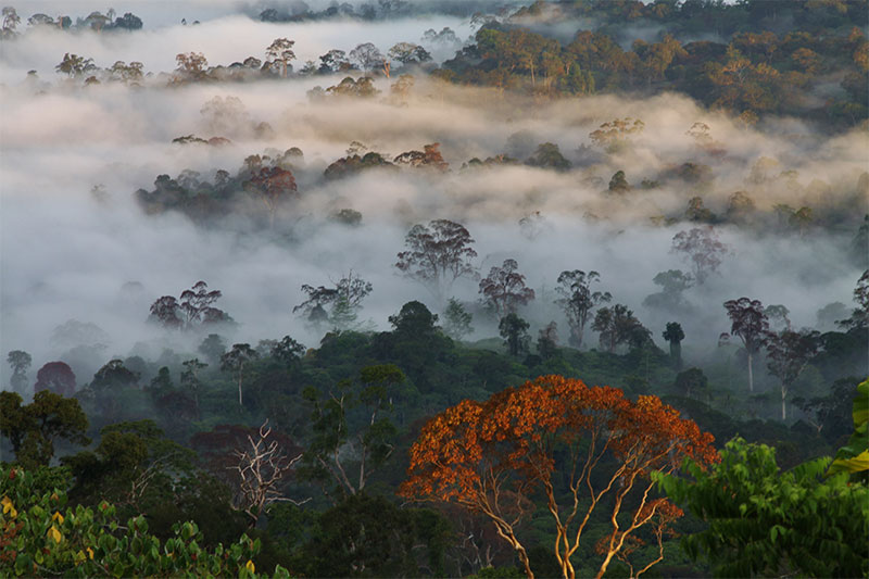 The Bornean rainforest as the morning mist begins to dissipate.