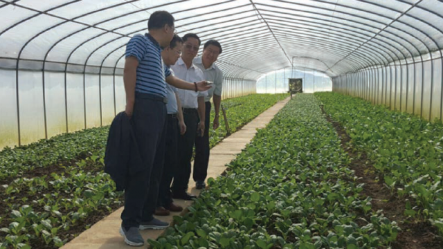 A greenhouse at Hua Ho Agricultural Farm