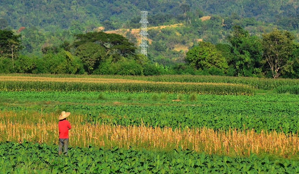 Explore green growth opportunities in agriculture and fisheries, clean energy, and sustainable transport and waste management. Photo credit: ADB.