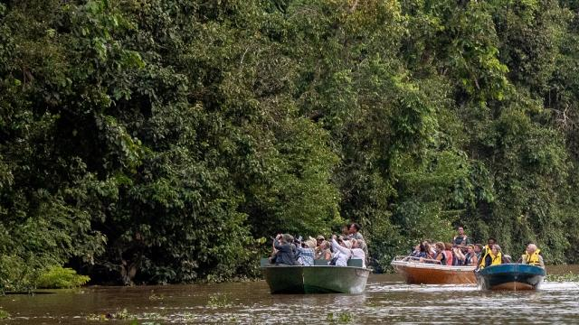 Tour boats on the Kinabatangan River in Sabah. Photo: iStock/michaelcurwood.
