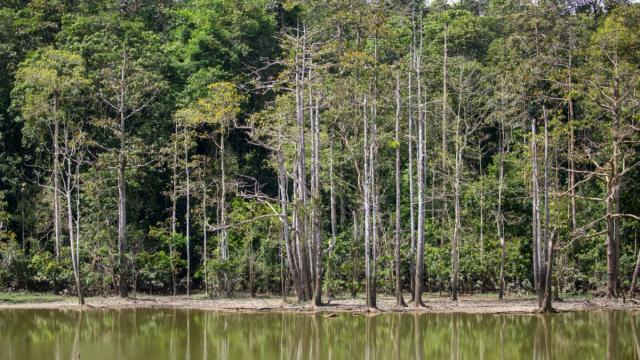 The Batu Puteh community has restored more than 900 hectares of critical rainforest habitat along the Kinabatangan Wildlife Corridor and has planted more than 300,000 trees.